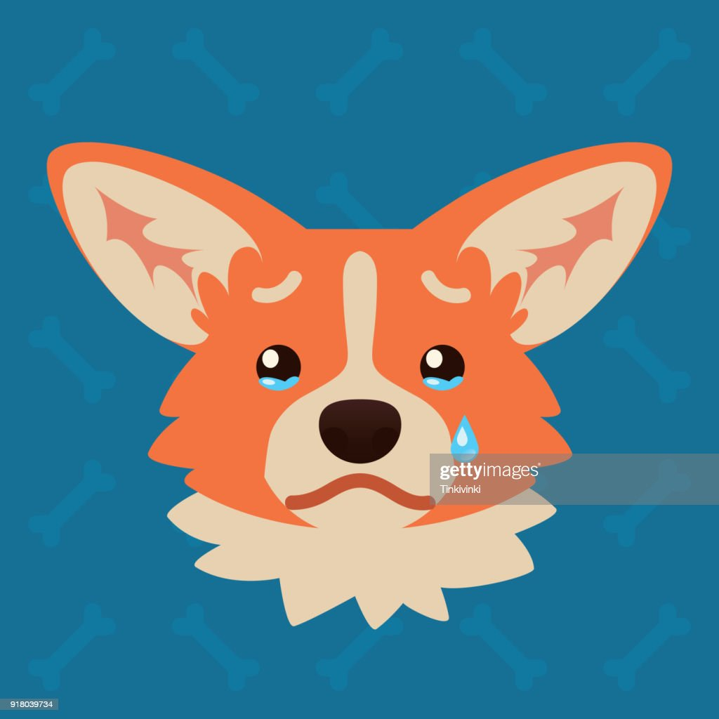 Corgi dog emotional head. Vector illustration of cute dog in flat style shows sad emotion. Crying emoji. Smiley icon. Chat, communication, print, sticker. Isolated object on blue background. Unhappy