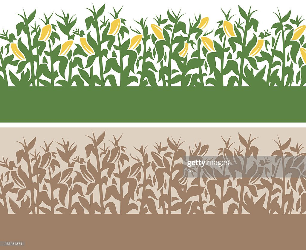 Corn Background : Stock Illustration