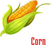 Corn ear vegetable plant icon