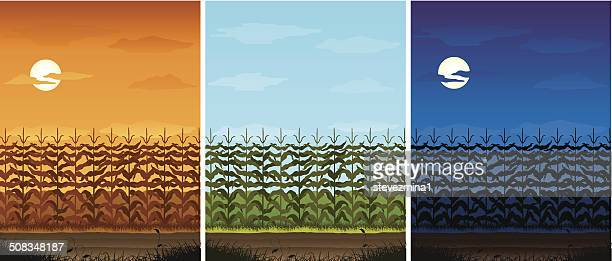 corn field - corn crop stock illustrations, clip art, cartoons, & icons