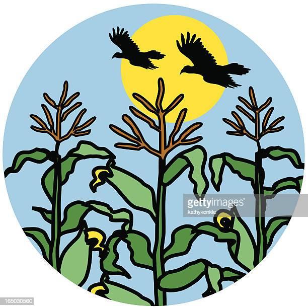 cornfield icon - zea stock illustrations, clip art, cartoons, & icons
