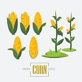corns and corn tree - vector illustration