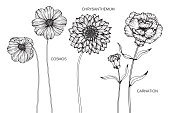 Cosmos, Carnation, Chrysanthemum flower drawing illustration. Black and white with line art on white backgrounds.