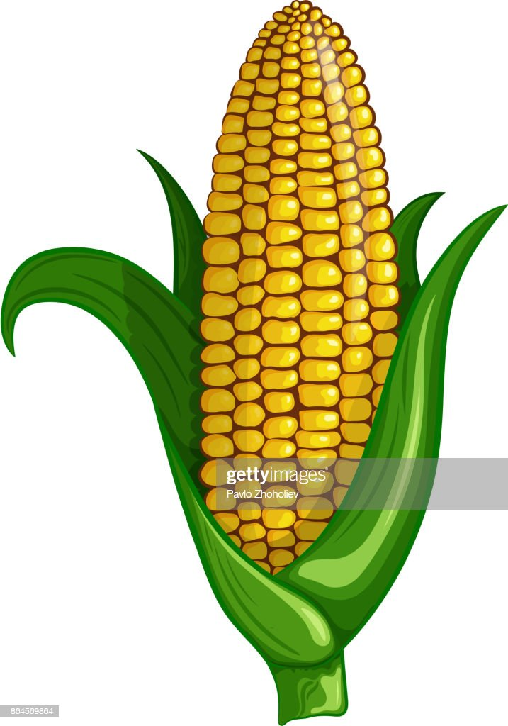 A cot of delicious sweet corn. Vector color illustration