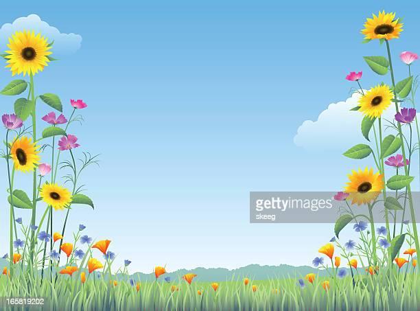 ilustraciones, imágenes clip art, dibujos animados e iconos de stock de país de flores silvestres - girasol