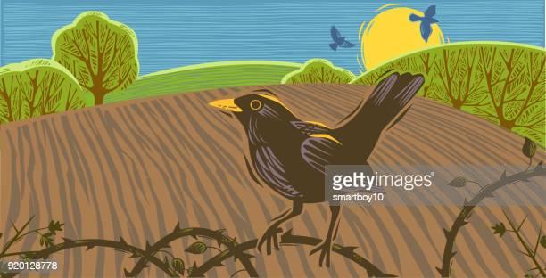 landschaft szene mit blackbird - hecke stock-grafiken, -clipart, -cartoons und -symbole