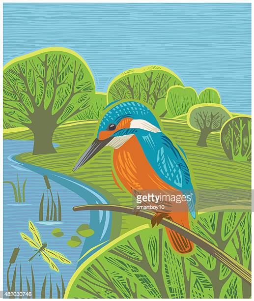 countryside scene with kingfisher - kingfisher stock illustrations