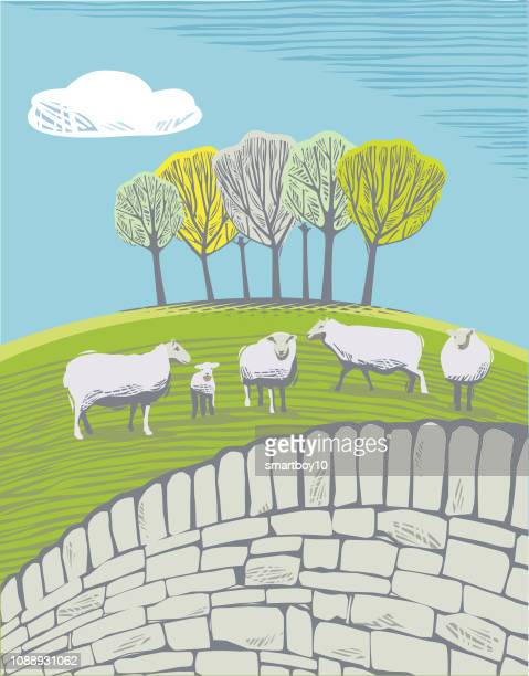countryside scene with sheep - young animal stock illustrations, clip art, cartoons, & icons
