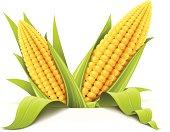 couple corncob