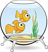 couple goldfish in an aquarium with caviar