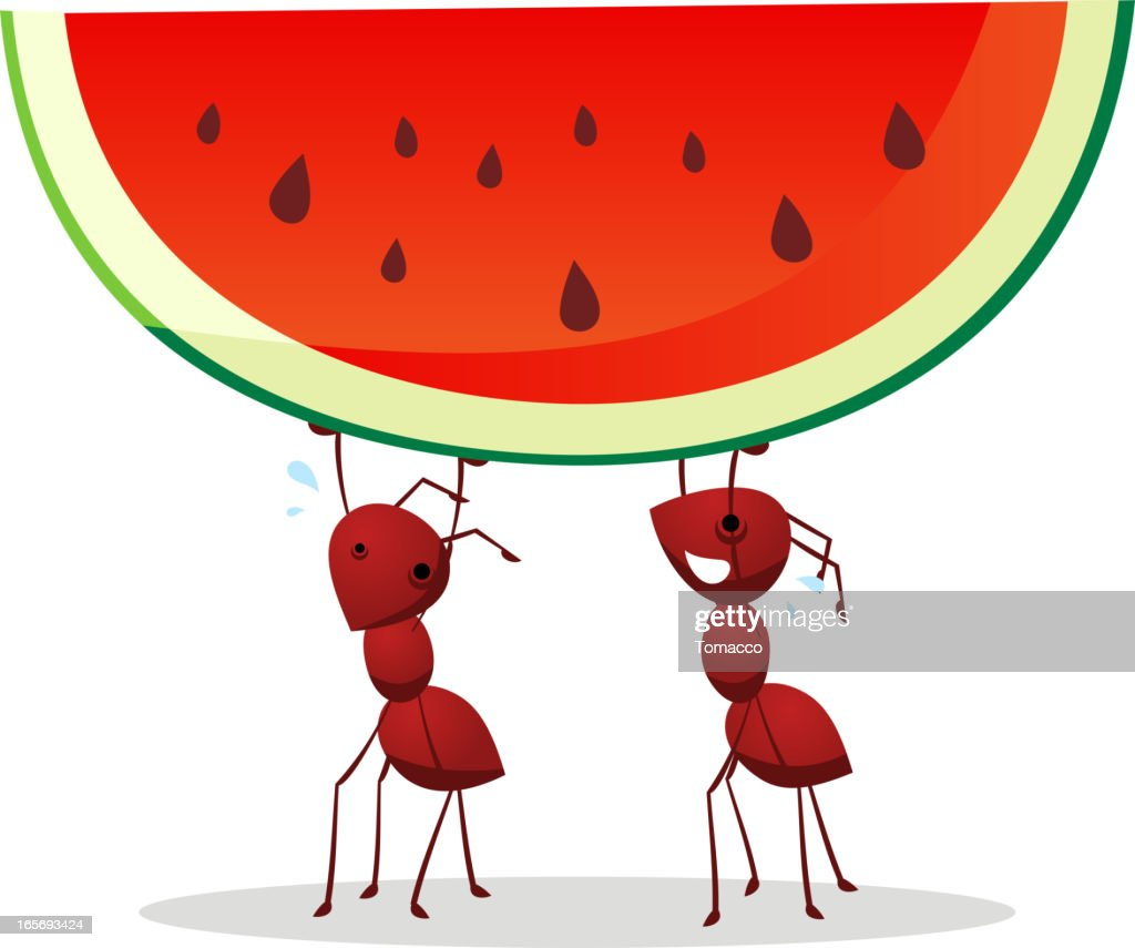 Couple of Ants carrying half green and red watermelon