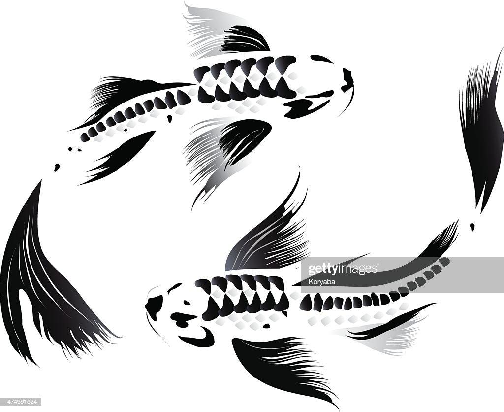 Couple of koi carp