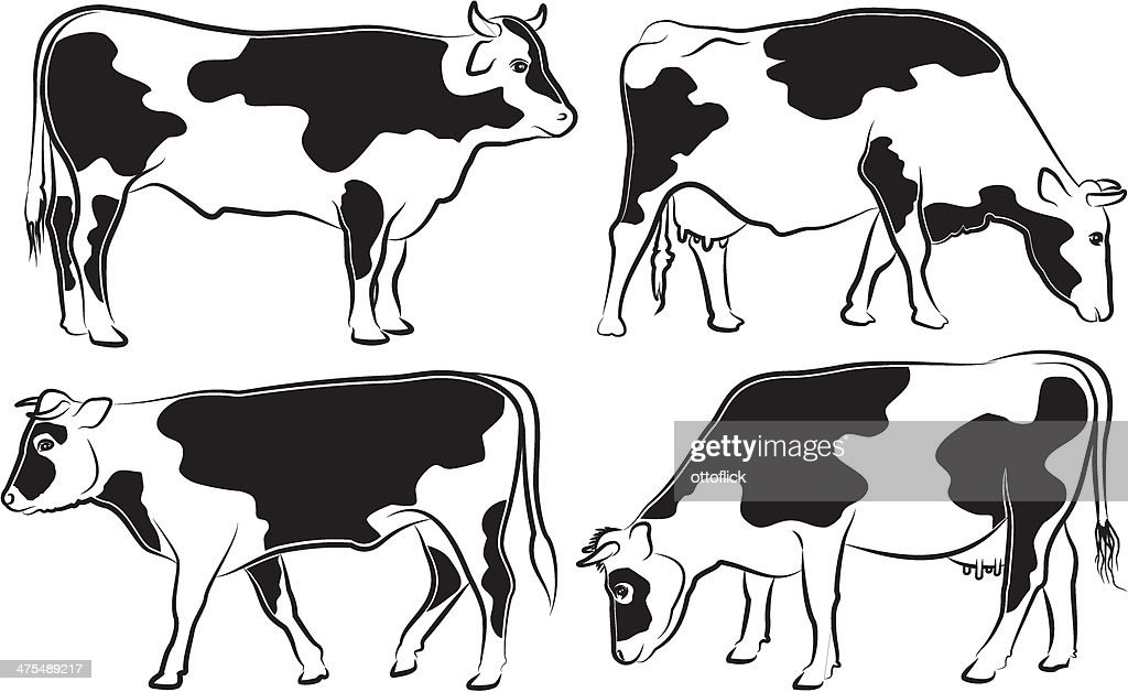 cow and bull - black and white