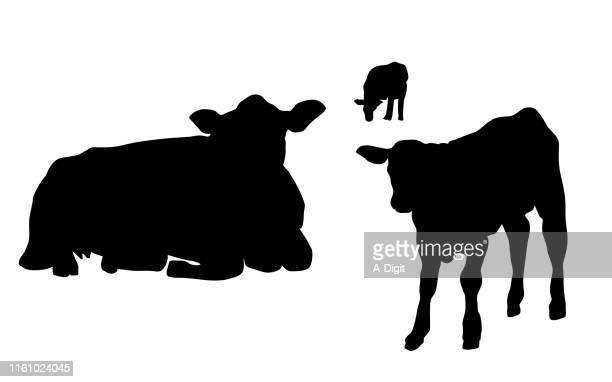 cow and calf - calf stock illustrations, clip art, cartoons, & icons