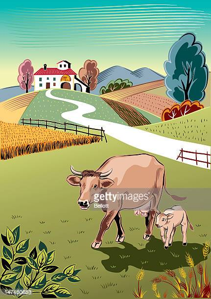 cow and her calf - calf stock illustrations, clip art, cartoons, & icons