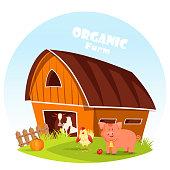 Cow at barn and pig at farm yard