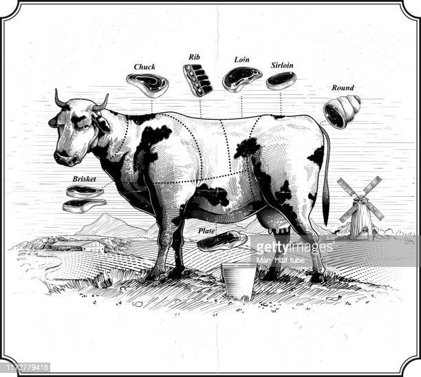 cow. beef cuts - shank stock illustrations, clip art, cartoons, & icons