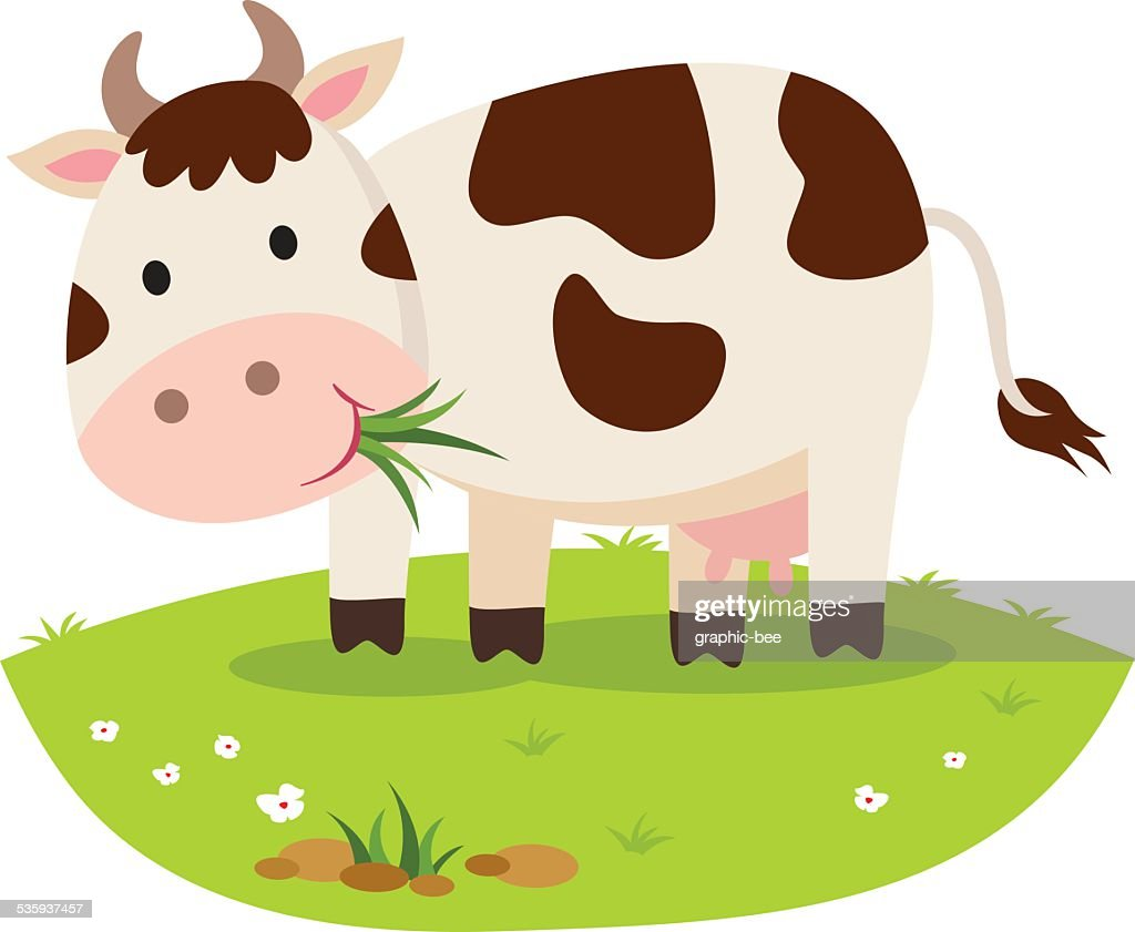 Cow eating grass. Cattle grazing.