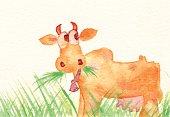 Cow Eating Grass - Vaca Comendo Capim