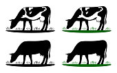Cow grazing on meadow, cow silhouette in field eating grass.