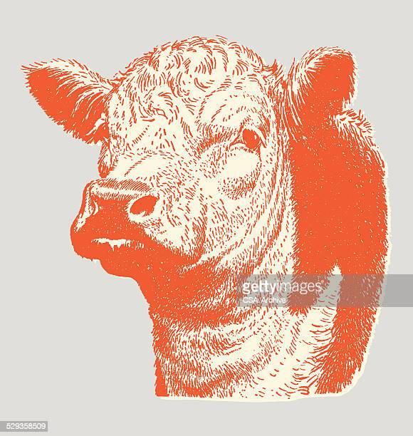 ilustraciones, imágenes clip art, dibujos animados e iconos de stock de vaca - carne de vaca