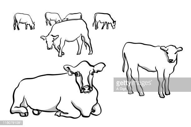 ilustraciones, imágenes clip art, dibujos animados e iconos de stock de vacas y terneros - ternera