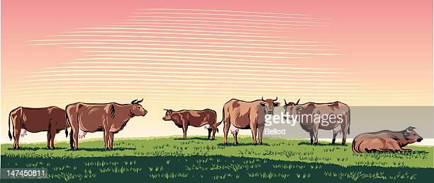 cows grazing - ranch stock illustrations