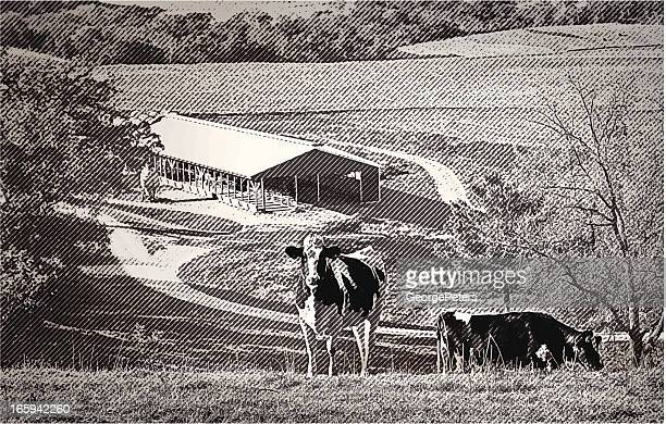 Cows In A Valley Farm