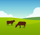 Cows on Green Field Pasture