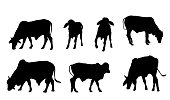 cows silhouette. They are eating grass from different sides.