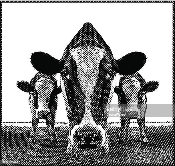 cows - cow stock illustrations