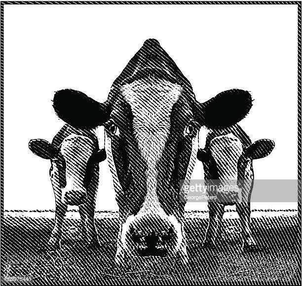 ilustraciones, imágenes clip art, dibujos animados e iconos de stock de la vaca - grupo de animales