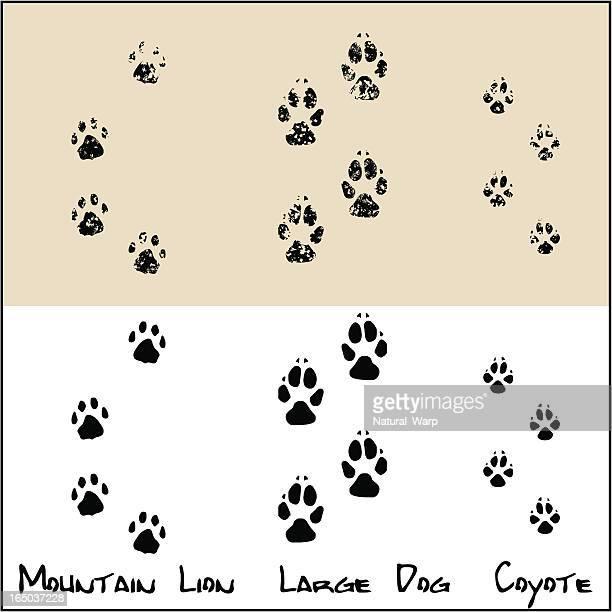ilustraciones, imágenes clip art, dibujos animados e iconos de stock de coyote-amplio perros de montaña de lion - puma