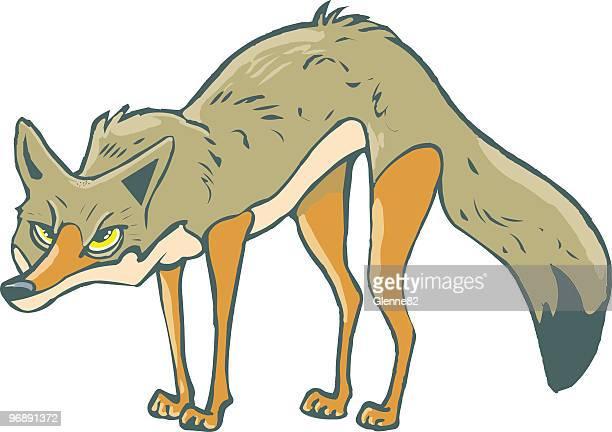 60 meilleurs coyote illustrations cliparts dessins anim s et ic nes getty images - Dessin de coyote ...