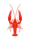 Crayfish. Isolated crayfish on white background