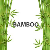 Creative vector illustration of chinese bamboo grass tree. Tropical asian plant art design. Abstract concept graphic banner, brochure, cover, booklet, print, flyer, book, blank, a4 element