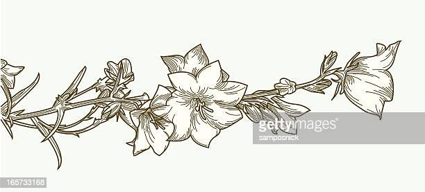 creeping clematis vine and flowers - ranunculus stock illustrations, clip art, cartoons, & icons