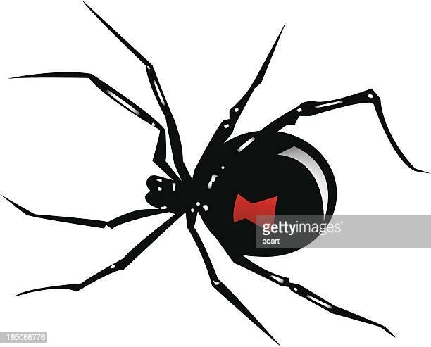 creepy crawler - black widow spider stock illustrations, clip art, cartoons, & icons