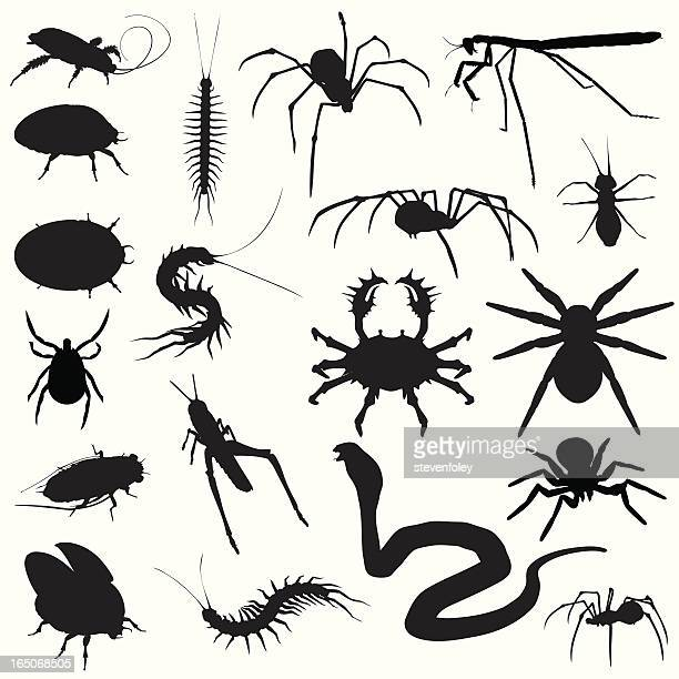 creepy crawlies! bugs spiders snakes - phobia stock illustrations, clip art, cartoons, & icons