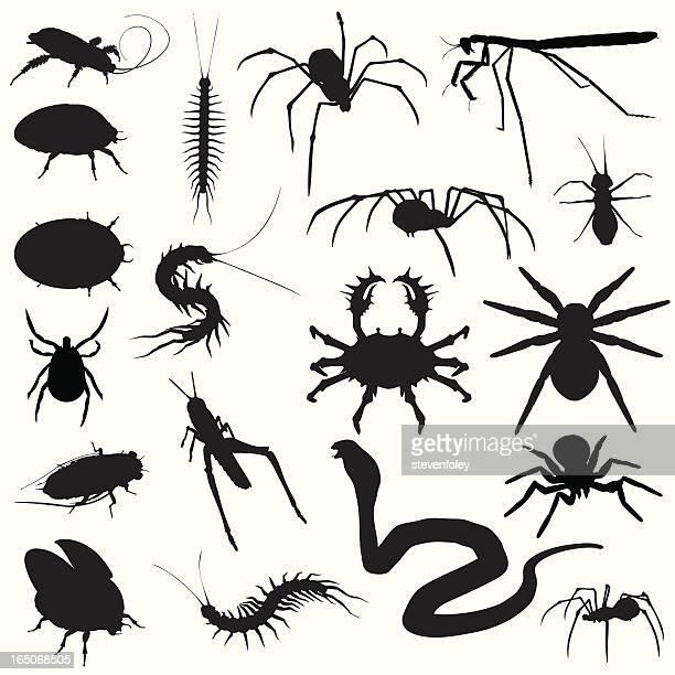 ilustrações de stock, clip art, desenhos animados e ícones de assustadora crawlies! erros spiders cobras - centopeia