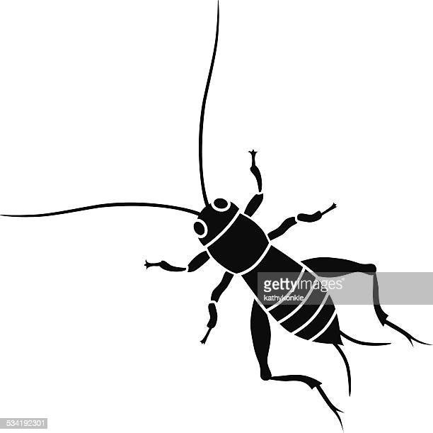 cricket insect in black and white - cricket insect stock illustrations
