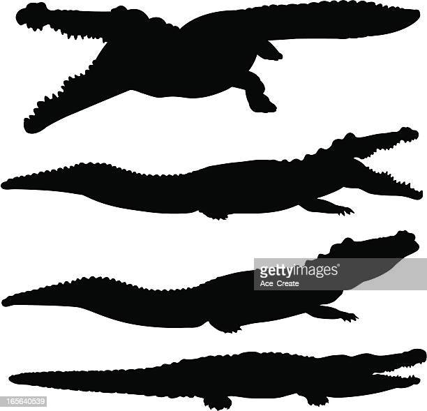illustrations, cliparts, dessins animés et icônes de alligator, crocodile et silhouette ensemble - crocodile