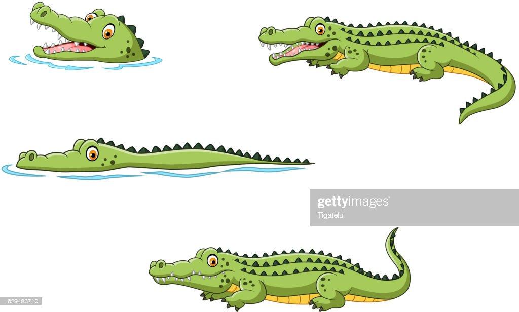 Crocodile collection set