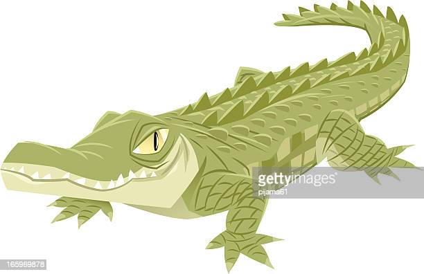 crocodile - alligator stock illustrations, clip art, cartoons, & icons