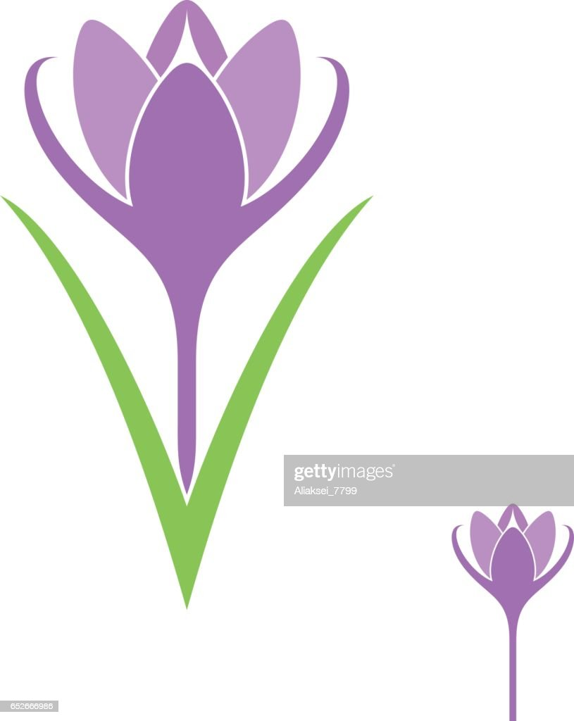 Crocus. Isolated flower on white background