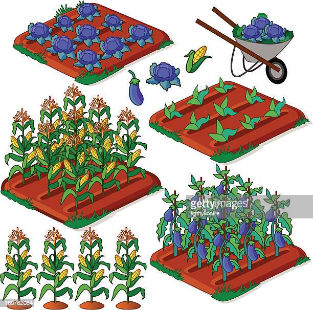 crop beds - zea stock illustrations, clip art, cartoons, & icons