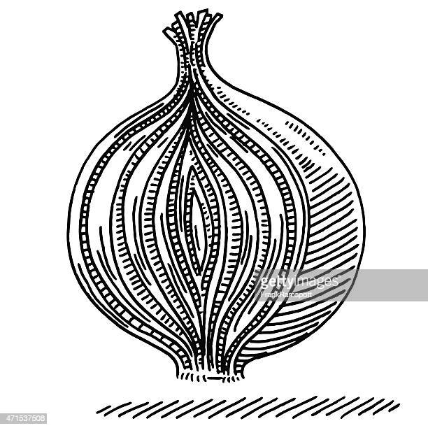 cross section cut onion layer principle drawing - onion stock illustrations, clip art, cartoons, & icons