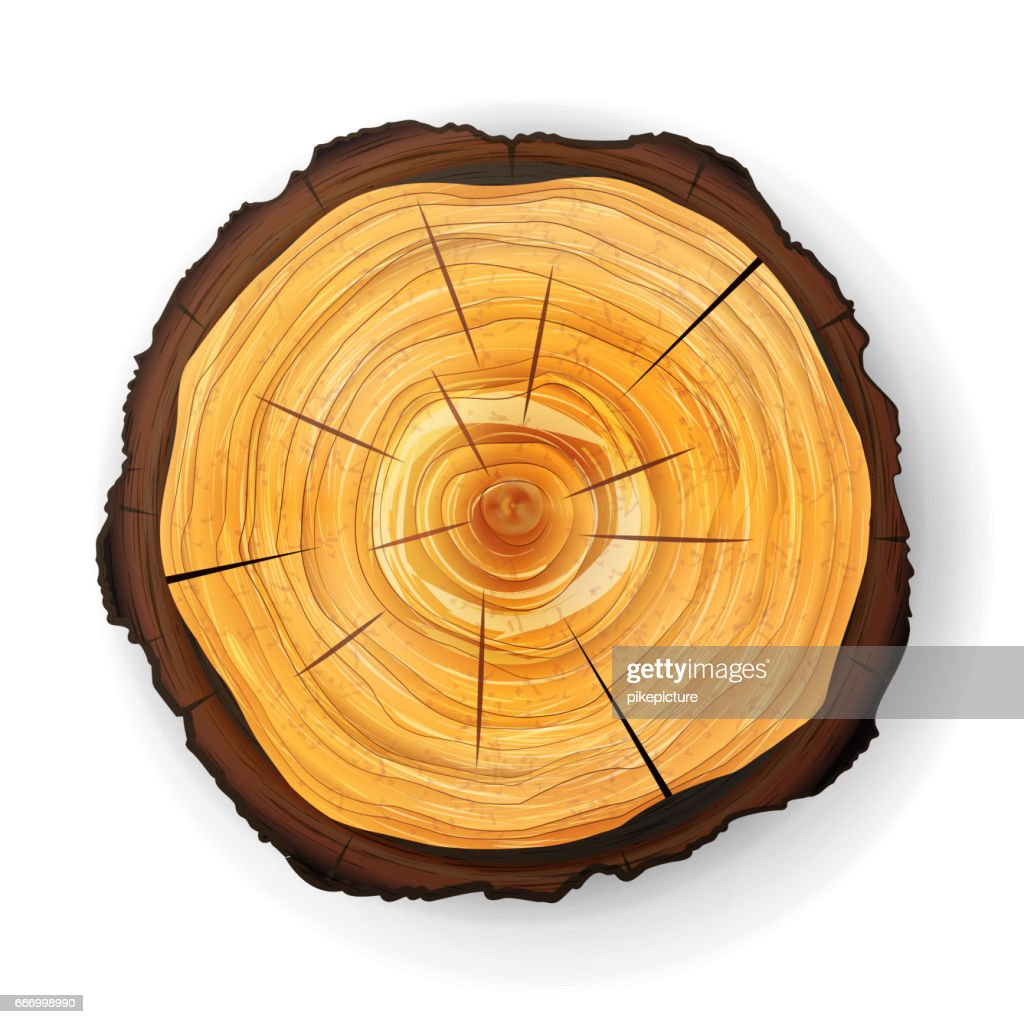 Cross Section Tree Wooden Stump Vector. Round Cut With Annual Rings