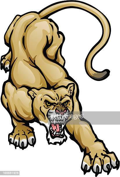 Accroupi Cougar