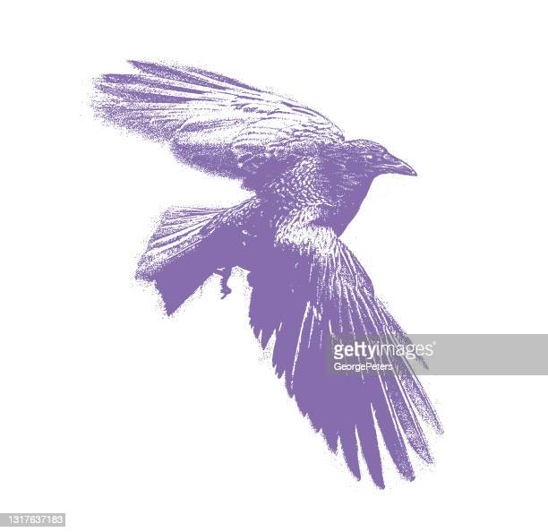 crow flying - spread wings stock illustrations
